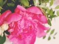 Pink the Town Peony Party 9