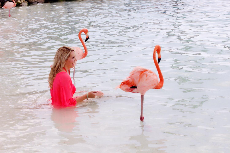 flamingo island taschengeld hobbyhuren